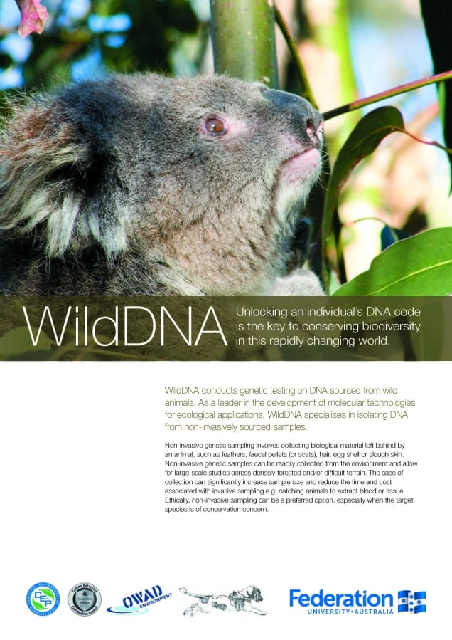 WildDNA Flyer Page 1 about working together with OWAD Environment on Koala conservation