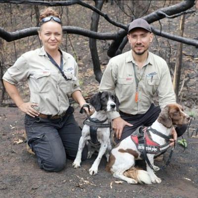 Koala ecology experts Olivia Woosnam and Alex Dudkowski with their Koala detection dogs Missy and Taz doing fieldwork