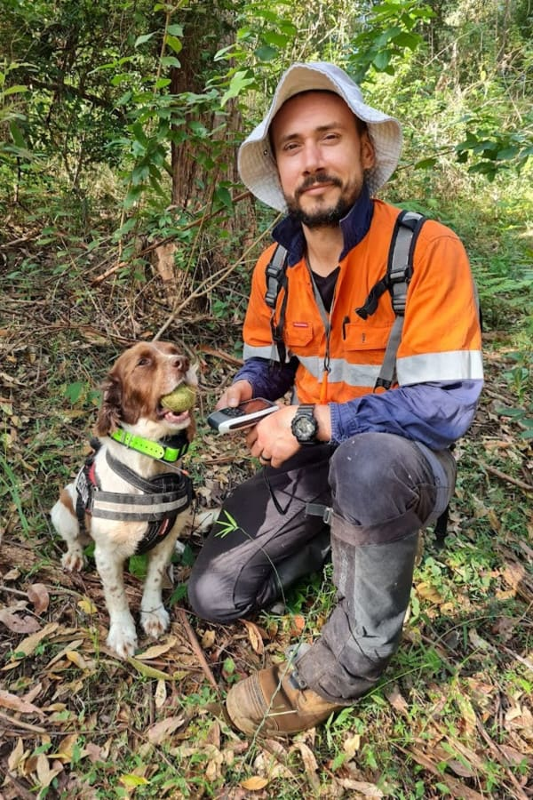 Alex Dudkowski from OWAD Enviroment doing field work with one of his professional Koala detection dogs - Taz